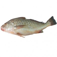Fish Red Rroaker fish 1kg
